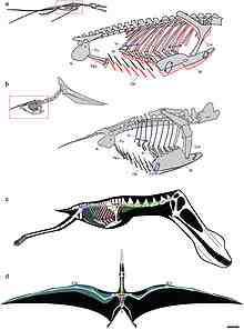 220px-pterosaurs