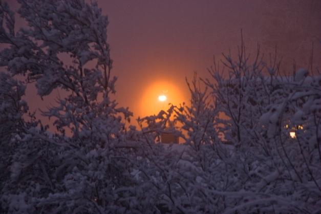 ash-winter