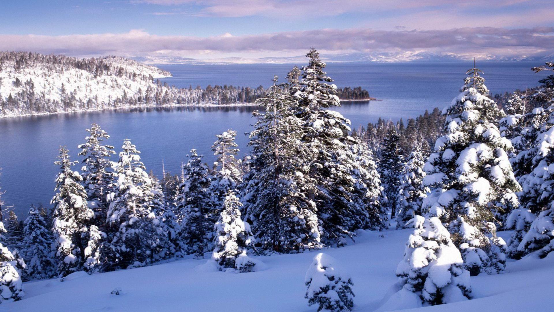 Christmas Trees In Massachusetts