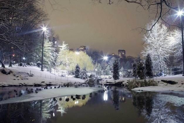 City-Park-Trees-Winter-Snow-Lights