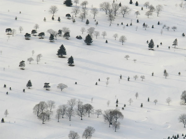 michigan-snow-and-trees